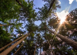 Landgoed Zonheuvel Klimaat Neutrale organisatie Climate Neutral