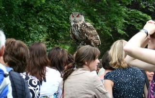 Dutch Hunting Falcons Landgoed Zonheuvel