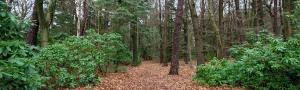 Landgoed Zonheuvel Doorn_Bos