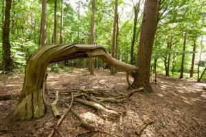 LandgoedZonheuvel Nationaal Parkt Utrechtse Heuvelrug